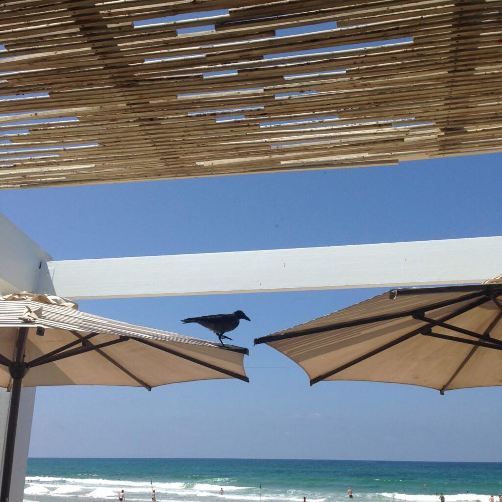 W Tel Awiwie życie toczy się na plaży.