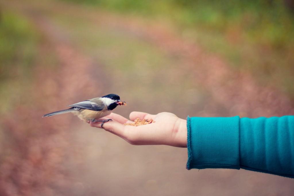karmienie ptaków