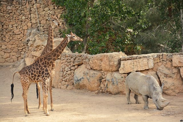 Zoo w Jerozolimie, fot. Lehava Beit Shemesh via the PikiWiki - Israel free image collection project
