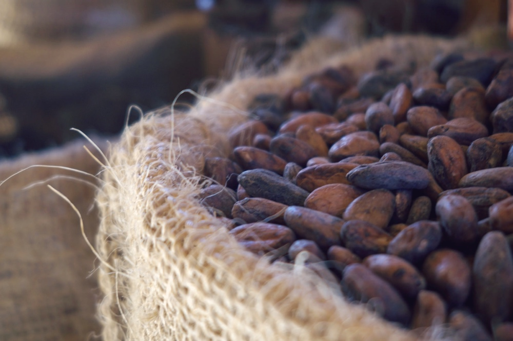Ziarna kakao, fot. Giulian Frisoni / Flickr, CC BY 2.0