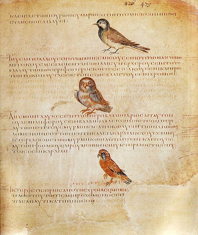 Kodeks zawiera kilkadziesiąt przedstawień rozmaitych ptaków
