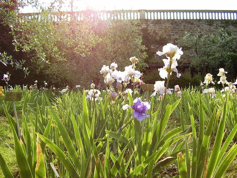 Giardino dell'iris, fot. Sailko / Flickr