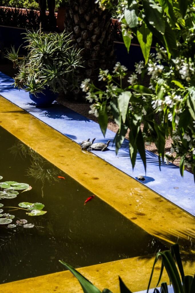 Yves Saint Laurent dodał do barw ogrodu słoneczną żółć. Fot. Anka Florczak