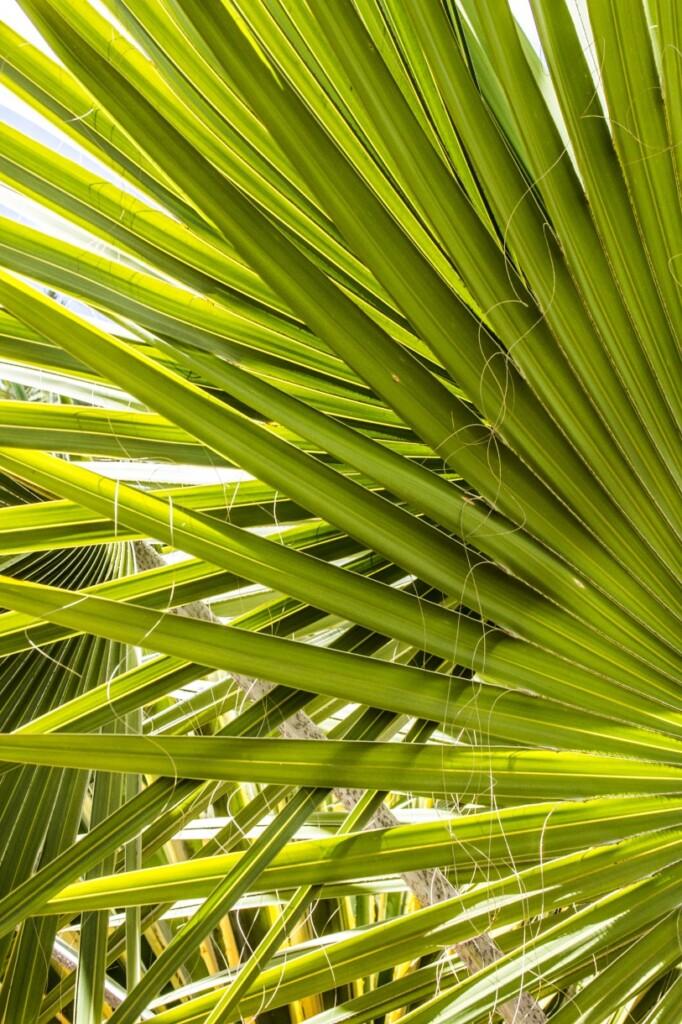 Nowy właściciel sprowadził do Majorelle wiele nowych gatunków roślin. Fot. Anka Florczak