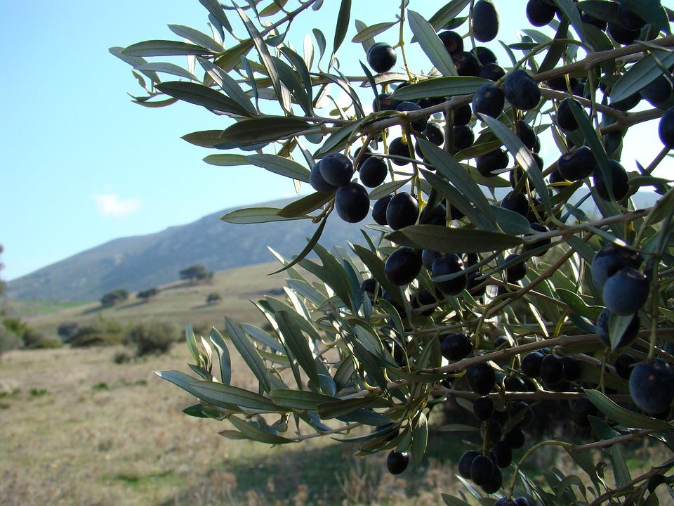 Grecki krajobraz pełen jest łagodności