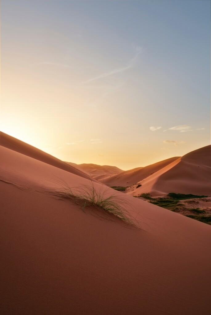 Na bardziej suchych obszarach nasiona roślin kiełkują szybko po deszczu, znosząc płytkie korzenie, kończąc cykl wegetacyjny iprodukując nasiona wciągu kilku dni, zanim gleba wyschnie. Nowe nasiona mogą leżeć wstanie uśpienia na suchej glebie przez lata, czekając na kolejne opady deszczu wcelu powtórzenia cyklu. Na zdjęciu Irk asz-Szabbi (arab. عرق الشبي, fr. Erg Chebbi) – pustynia piaszczysta (erg) wpołudniowo-wschodnim Maroku, wobrębie Sahary wpobliżu granicy zAlgierią wMaroku, fot. Kevin Wenning