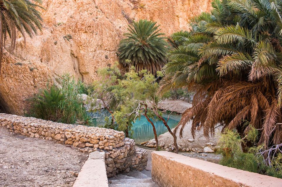 Pod pustynią Sahara znajdują się jedne znajwiększych na świecie zasobów wód podziemnych, obsługujące około 90 największych oaz. Na zdjęciu: oaza wTunezji