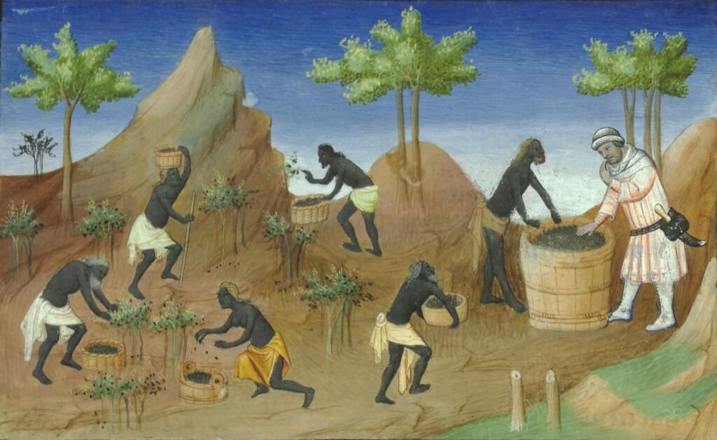 Scena zbierania pieprzu zLe Livre des Merveille