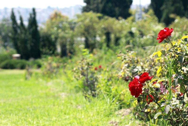 Wohl Rose Garden, Yair Aronshtam / Flickr, CC BY-SA 2.0