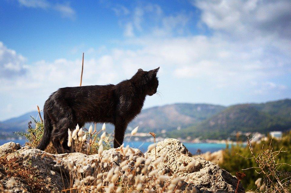Największym skupiskiem kotów wdzisiejszej Italii jest prawdopodobnie wyspa Lipari, gdzie koty przemieszczają się ulicami wcałych stadach. Niewątpliwie uroczą pamiątką ztego miejsca jest zatem figurka kota wykonana zlawy