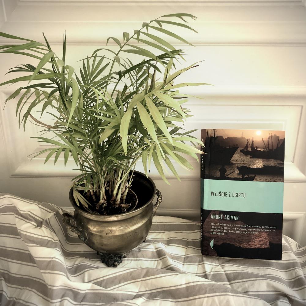 """Autor """"Wyjścia zEgiptu"""" przedstawia świat widziany oczami dziecka, istoty niewinnej inieświadomej, która dopiero pod koniec książki (lub wpojawiających się retrospekcjach) patrzy na minione wydarzenia zpunktu widzenia dorosłego człowieka. Czytelnik sam musi uporać się ze swoimi emocjami, ate mogą być niemałe, kiedy dostrzega się niuanse powieści – wewnątrzrodzinne konflikty, głuchotę matki, jawną niewierność ojca, przygody wuja-awanturnika, który watmosferze skandalu wyjeżdża zEgiptu, wreszcie zderzenie zkulturą arabską. Wszystko to przyprawiono niemałą dawką nostalgii – niewypowiedzianej wprost, ajednak wszechobecnej."""