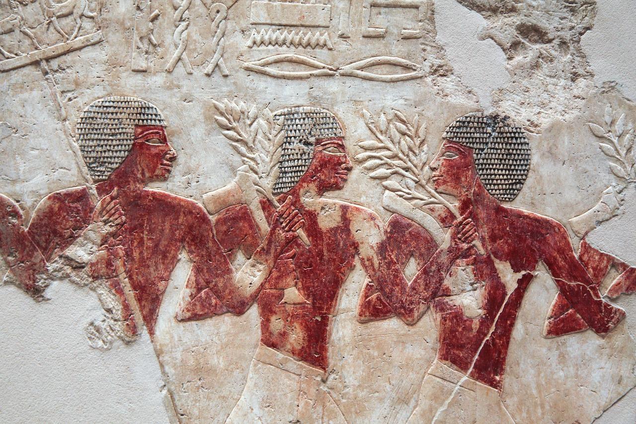 gałązki oliwne wEgipcie